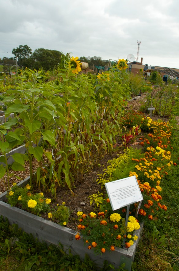 Individual plots can be rented for $30/year.
