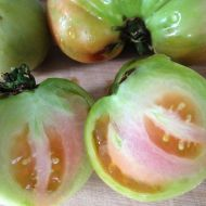 Green tomatoes that I used for chutney.