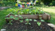Baby squash in front of tomatoes.