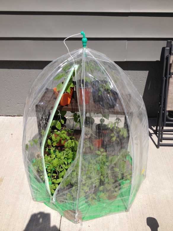 Plastic portable greenhouse worked beautifully for hardening off plants...I didn't have to bring them in every night! Gift from a neighbour.